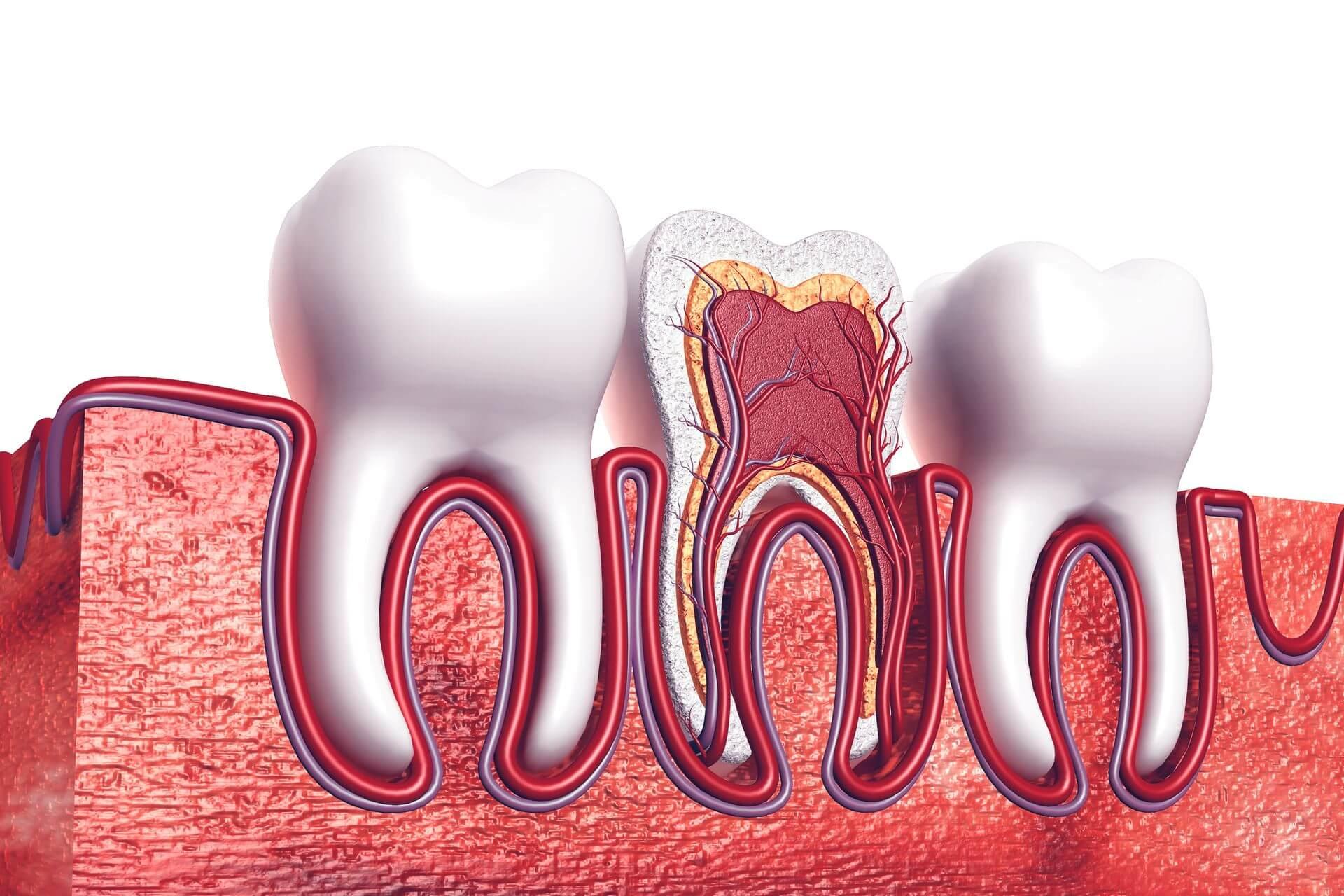 esperti in devitalizzazione ed endodonzia